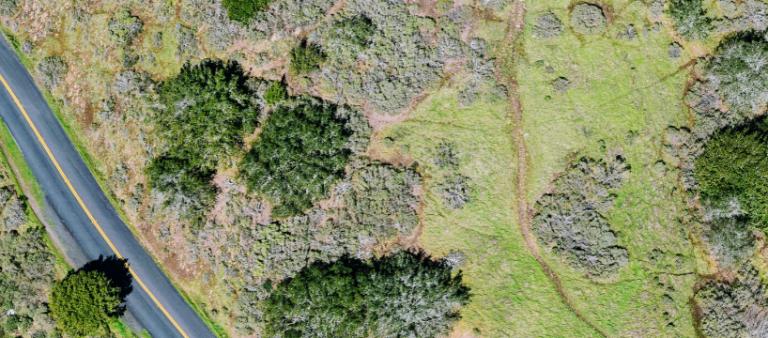 Birdseye view of a road running through a field